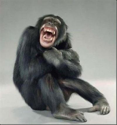 50 Koleksi Gambar Hewan Tertawa Lucu Gratis Terbaik