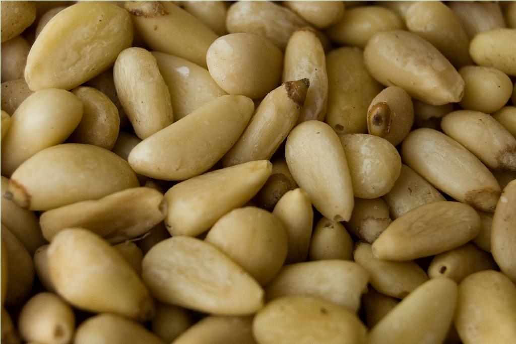 Kacang Pinus (Wikipedia)