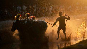 Seorang peserta mengikuti Kambala, lomba balap kerbau untuk memperingati berakhirnya musim panen di Surathkal, India, Sabtu (3/1). ANTARA FOTO/REUTERS/Abhishek Chinnappa
