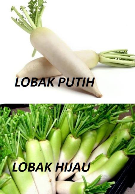 lobak putih dan lobak hijau