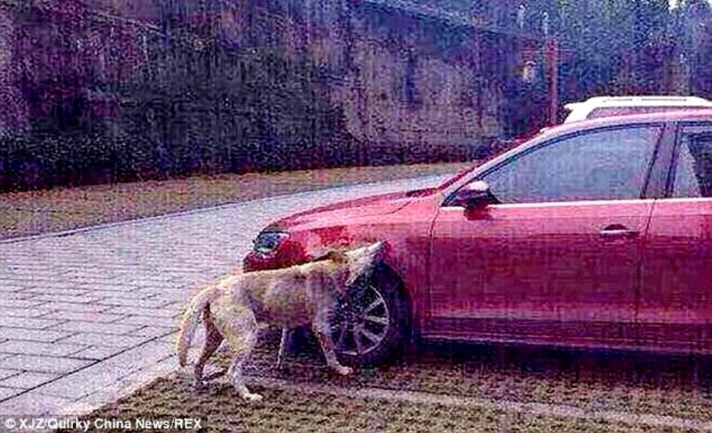 Membalas anjing di Cina 3